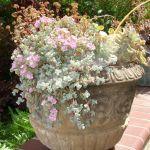 Mixed Succulents in Pot