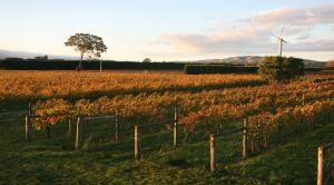 On Giants' Shoulders Vineyard Autumn