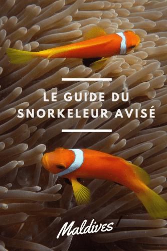 Le guide du snorkeleur