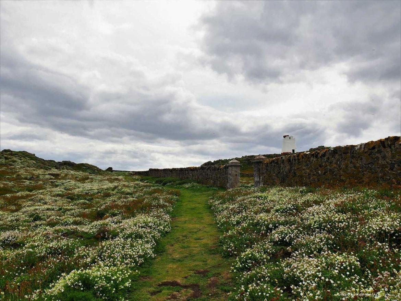 Fleurs sur l'Ile de May en Ecosse