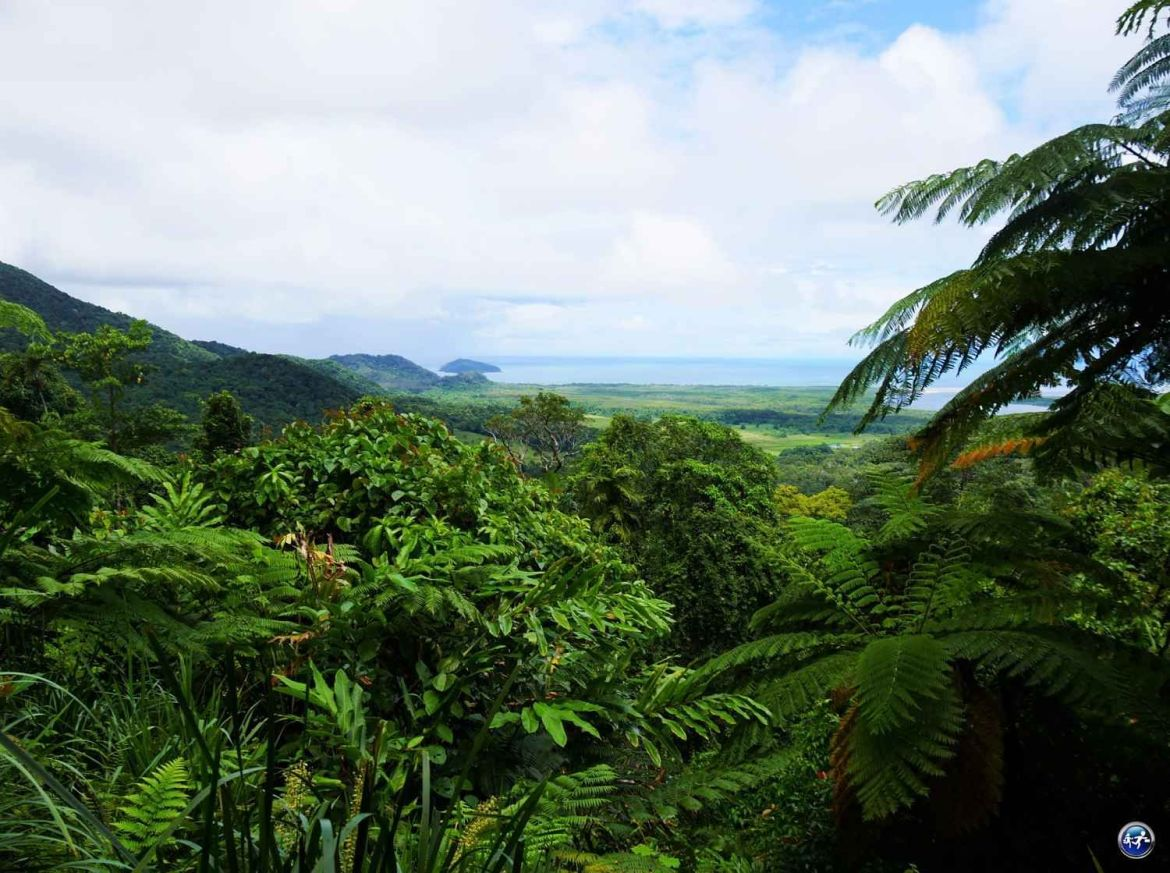 cape tribulation daintree rainforest queensland australie blog voyage suisse cosy