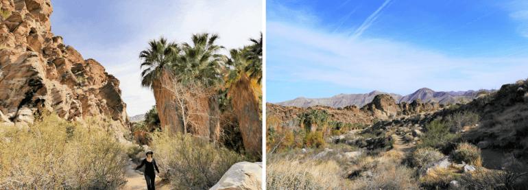 Indian Canyons en Californie du Sud