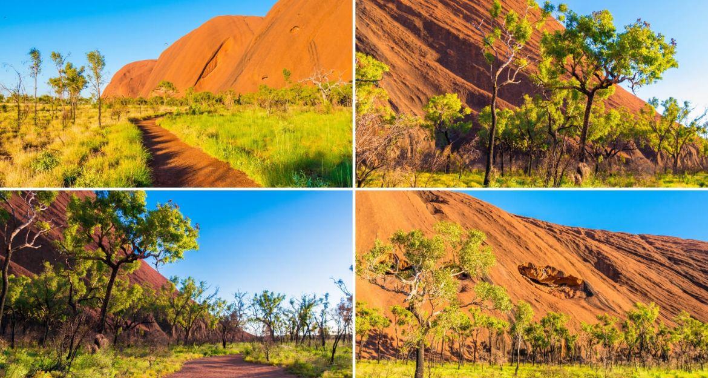 Un air d'Afrique avec la végétation luxuriante aux pieds d'Uluru