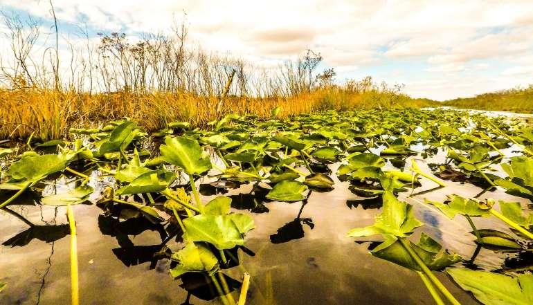 Visiter-la-mangrove-en-airboat