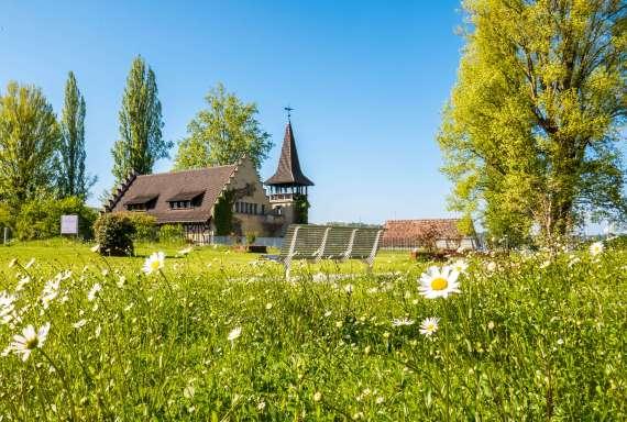 Steckborn et un champ de fleurs