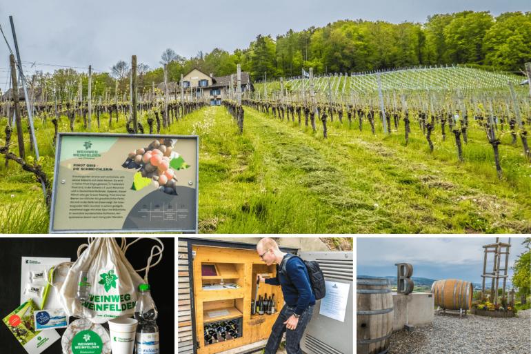 Visiter le Weinweg de Weinfelden en Thurgovie