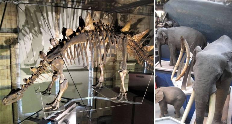 Visite du musée d'histoire naturelle à Londres