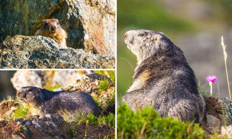 Sentier des marmottes Zermatt