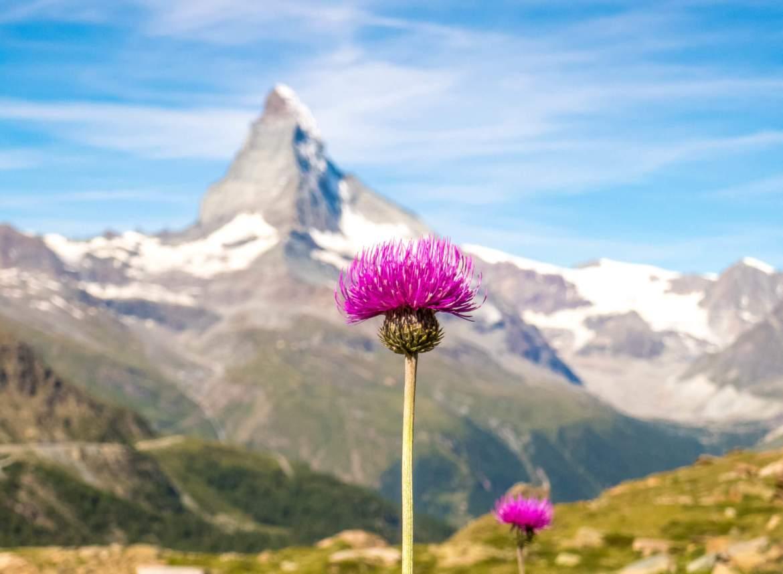 Voir le Matterhorn en randonnée à Zermatt