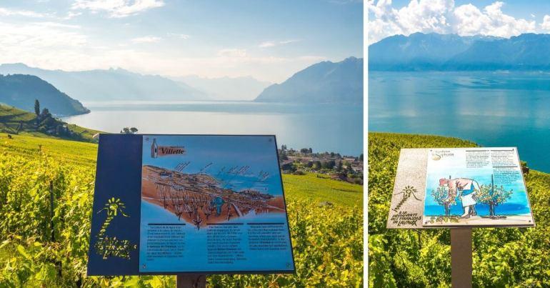 Appellations origines contrôlées vignobles Lavaux