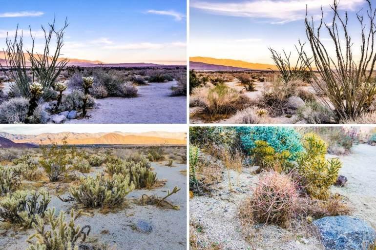 Nature Trail Visitor Center Anza Borrego Desert Californie