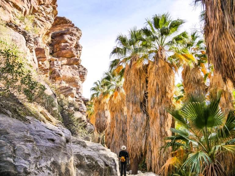 Palmiers californiens Sud Californie