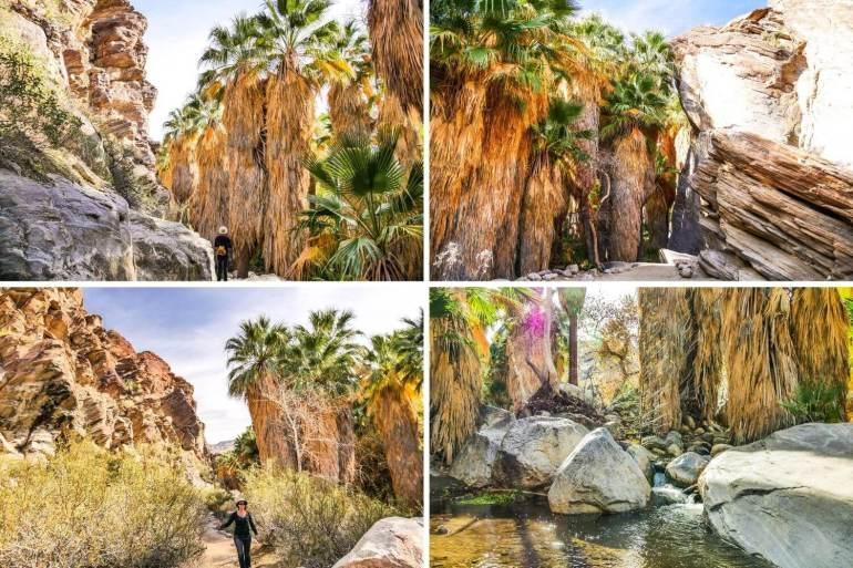 Oasis et palmier californien désert Indian Canyons