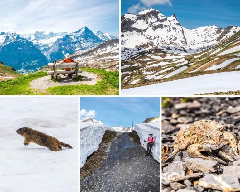 Randonnée Bachalpsee Grindelwald