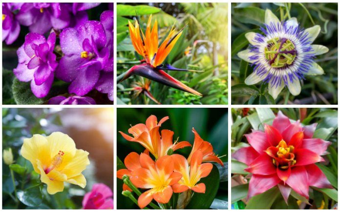 tropical flowers collage