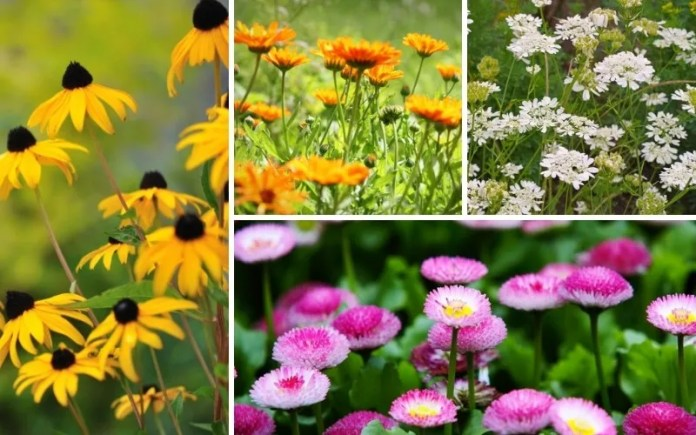 11 Perfect Hardy Annuals