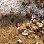 琴引き浜 ビーチコーミング