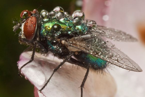 マクロレンズで虫を撮影したら、まるで別世界