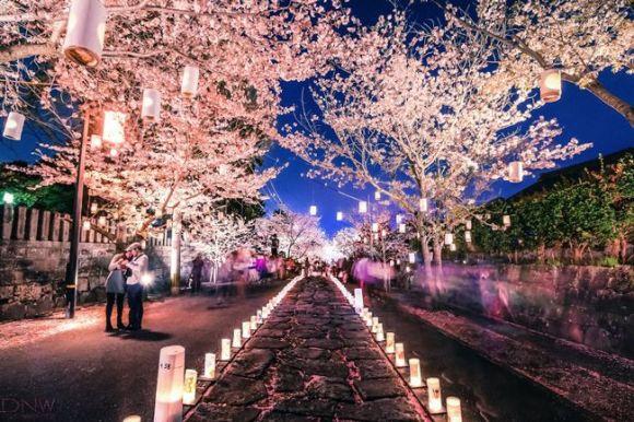 本妙寺 桜灯籠 日本