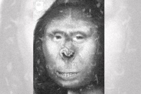 19世紀のロシアに住んでいた女性がDNA検査でビッグフットの可能性が高いことが判明!!