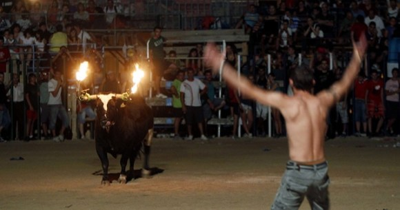 Flaming-bulls-of-Amposta--001