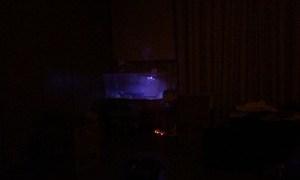 【飼育2日目】一晩の野宿からシェルターを覚えたオニプレートトカゲ