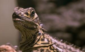 爬虫類飼育者による感想いきます。