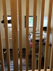 隔離部屋にいる猫ちゃんたち