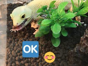 爬虫類のコンディション