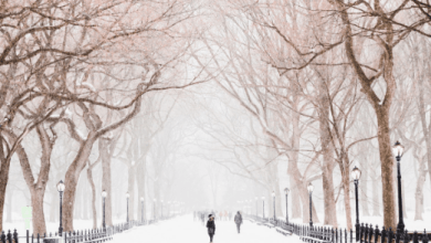 Photo of Winter is Coming meme gif