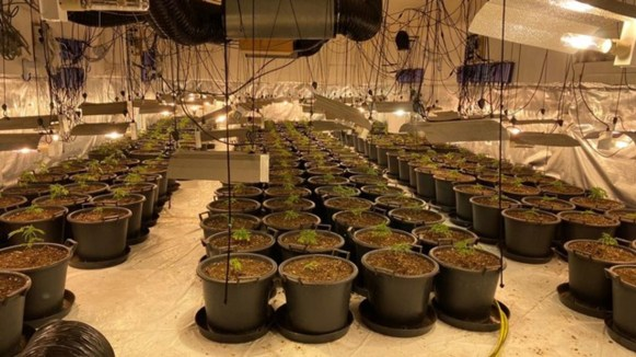 skynews-cannabis-farm-cannabis-raid_5141235