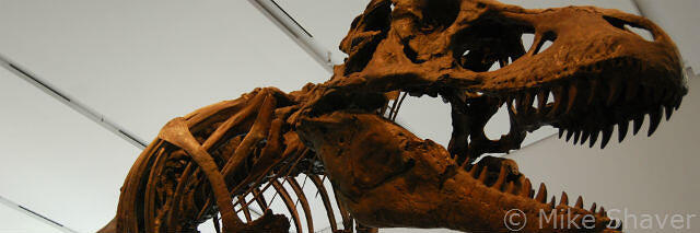 Is you marketing firm a dinosaur?