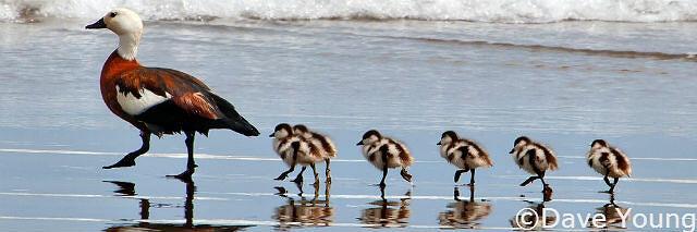 Surfer Chicks