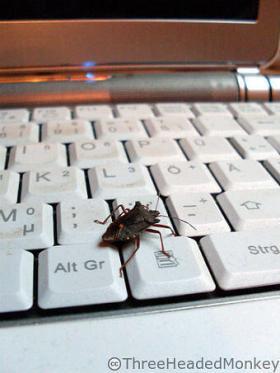 Got-a-Bug