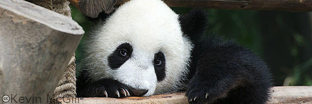 Panda 4.0 impact was so cute for all