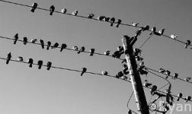 like-birds-on-wires