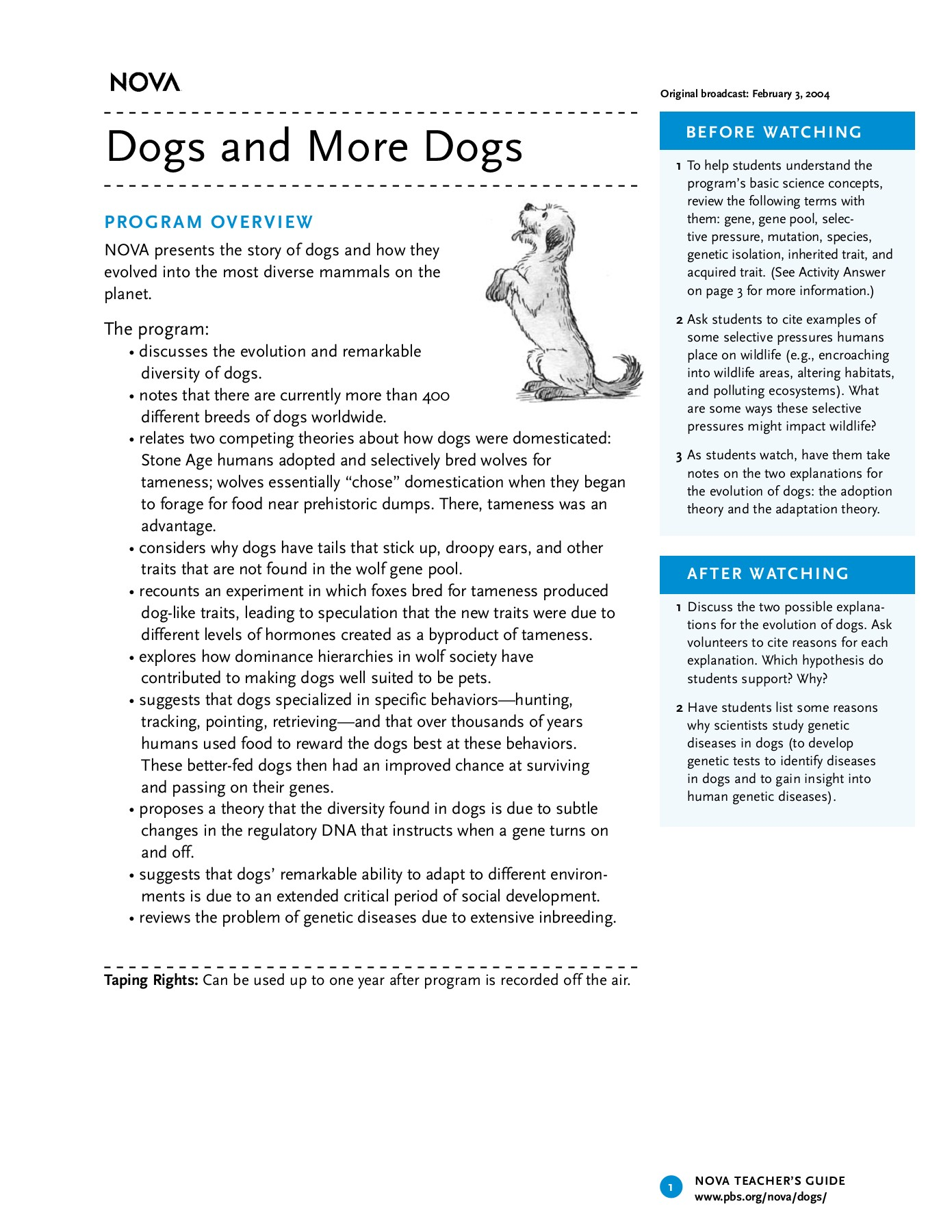 Nova Dogs And More Dogs Worksheet Key