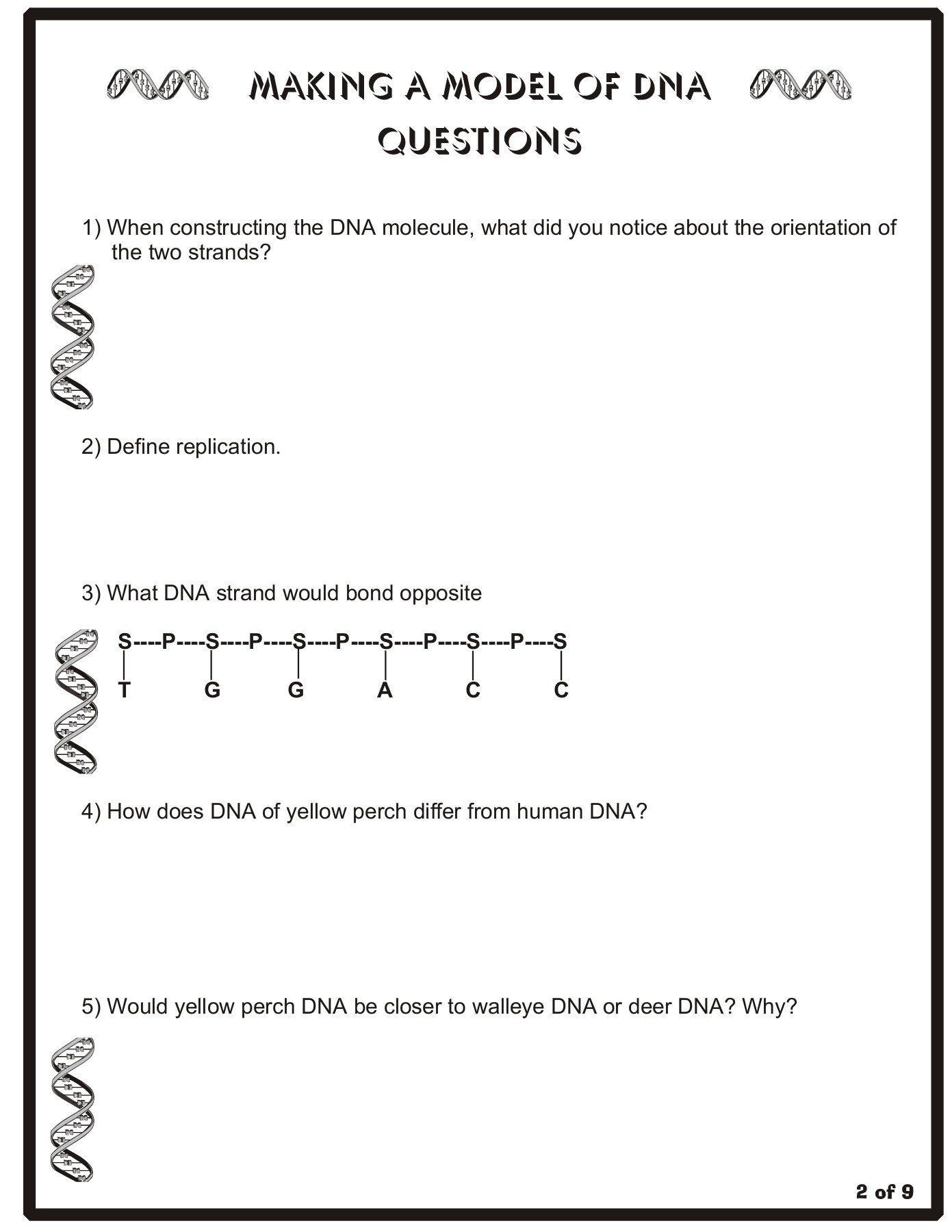 Build A Dna Ladder Worksheet Answers