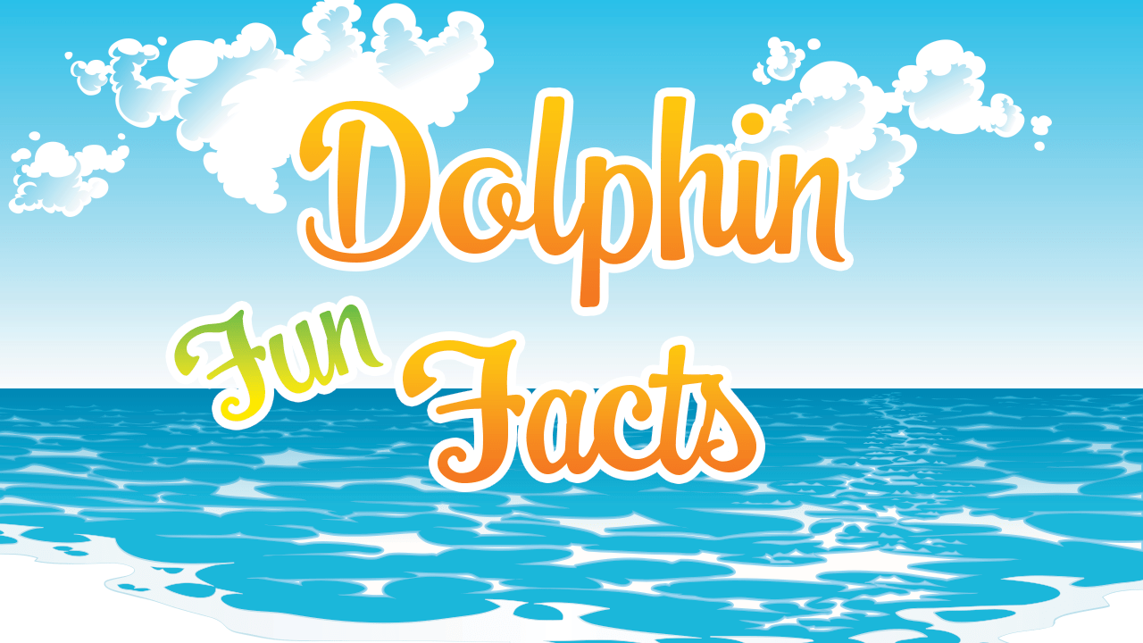 Dolphin Fun Facts