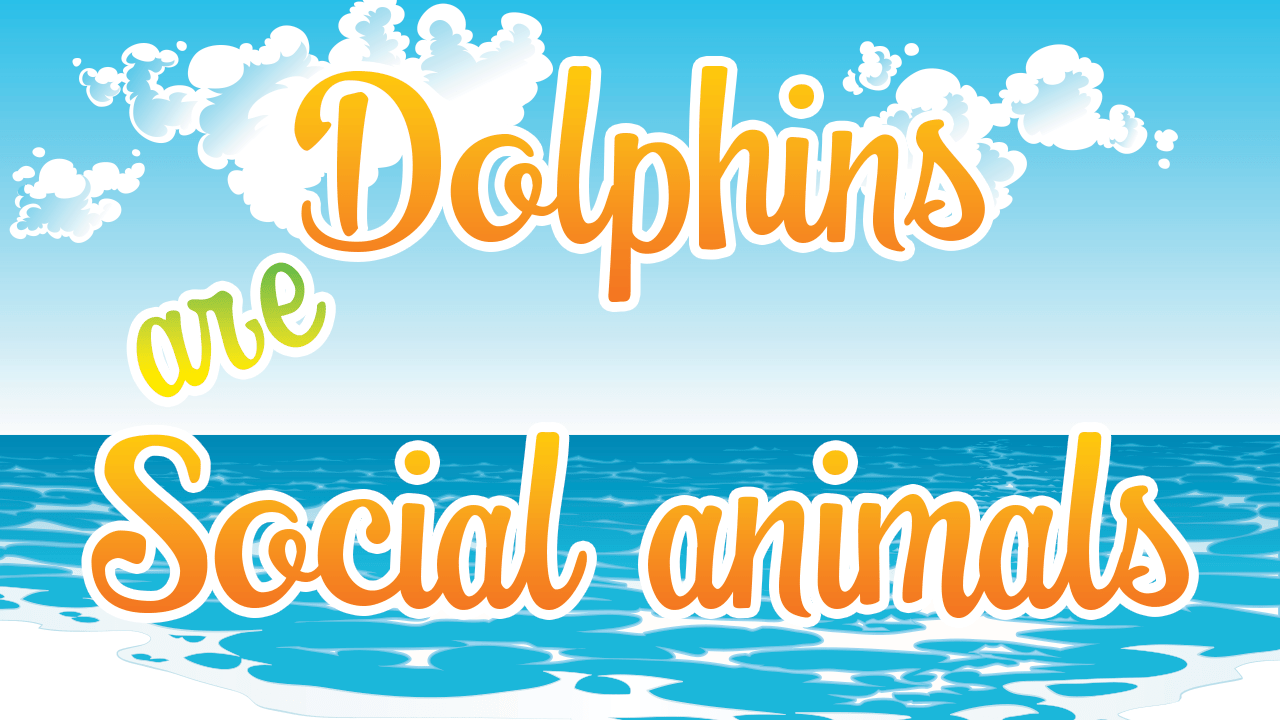 Dolphins are Social Animals