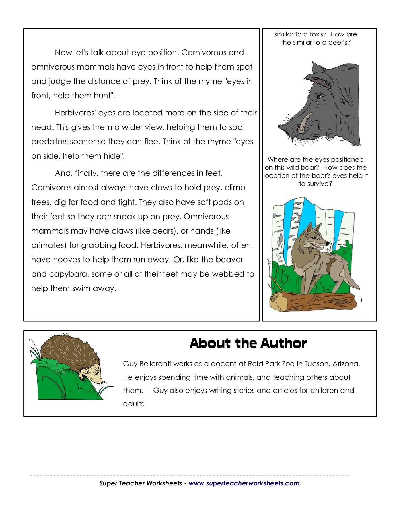 Herbivore Carnivore Omnivore Worksheet