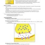 Synaptic Transmission Part 2 Aw Bc Com