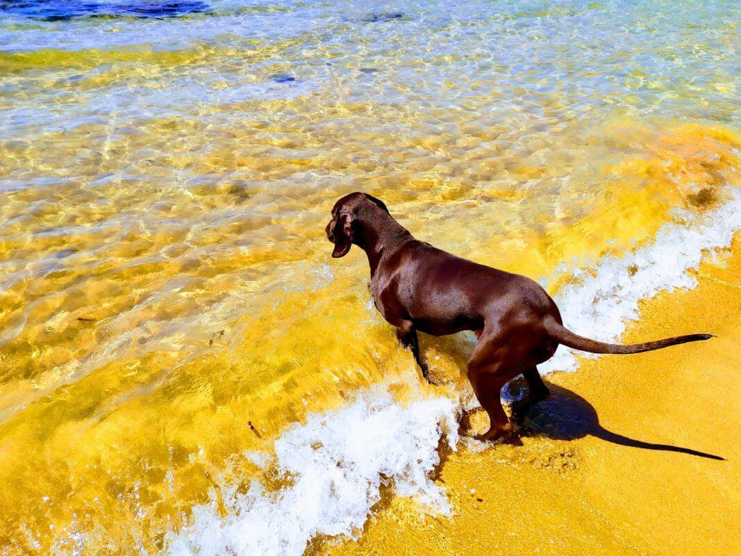 Chocco META mascot loves the water
