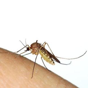ηλεκτρικά εντομοκτόνα