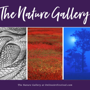 The Nature Gallery