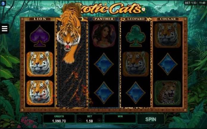 Online Casino Bonus, Exotic Cats