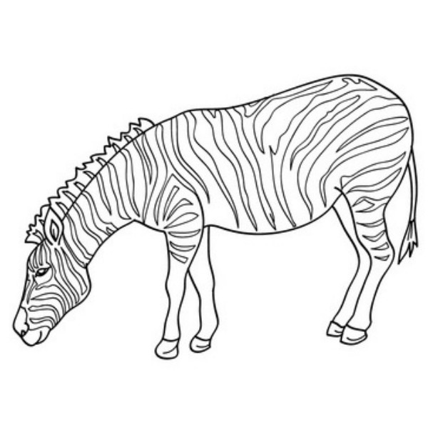 coloring pages of zebras online coloring pages