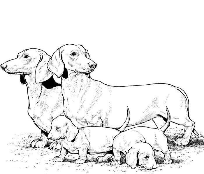 50 Desenhos De Cachorros Para Imprimir E Colorir Online Cursos