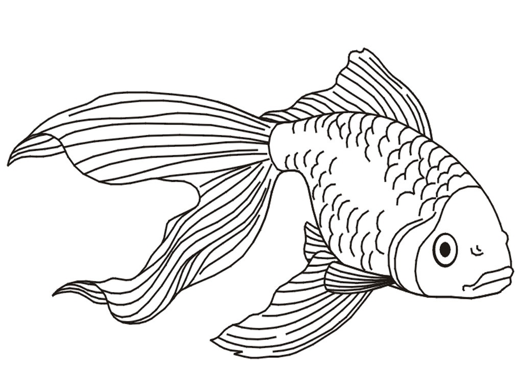 30 Desenhos De Peixe Para Imprimir E Colorir Online Cursos Gratuitos