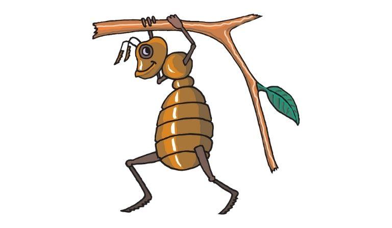 चींटी के कितने पैर होते हैं? Chiti Ke Kitne Pair Hote Hain?
